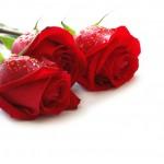 roses-4e